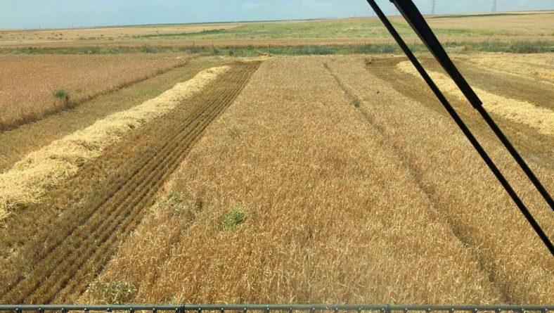 Sigue la calma en la cotización de los cereales