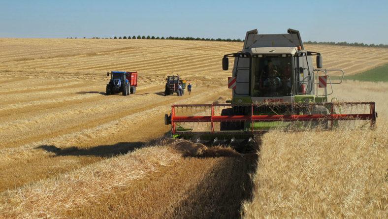 La cosecha confirma las buenas expectativas