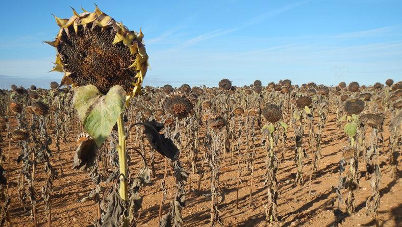 Sigue sin tocar techo la subida de precios de los cereales en la Lonja de Salamanca y vale más la pipa