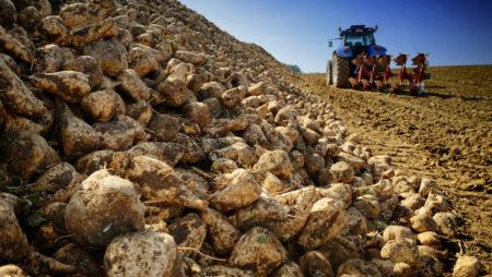 El arranque de la remolacha avanza a buen ritmo y con producciones de calidad