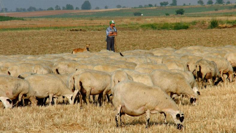 La Junta celebra con éxito 'Los viernes del Defensor' de noviembre dedicados al ovino-caprino de carne