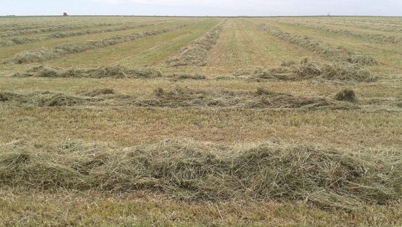 La consejería duplica la ayuda a seguros para cultivos forrajeros