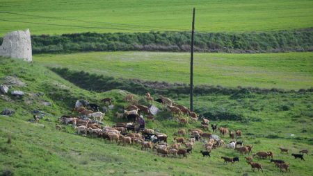 Los sectores cunícola y de ovino-caprino ya tienen extensión de norma, mientras la del lácteo se modifica