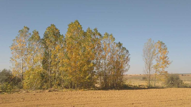 Castilla y León suma 315 explotaciones con titularidad compartida, 108 de ellas en León
