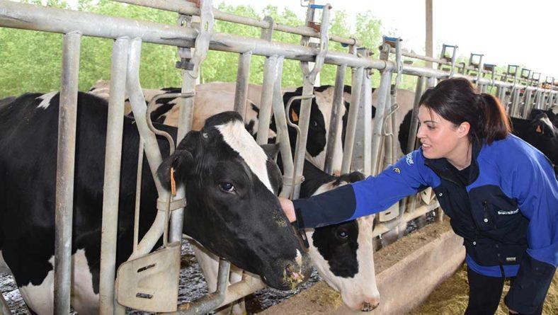 El Gobierno aprueba un decreto para dotar de mayor transparencia al sector lácteo