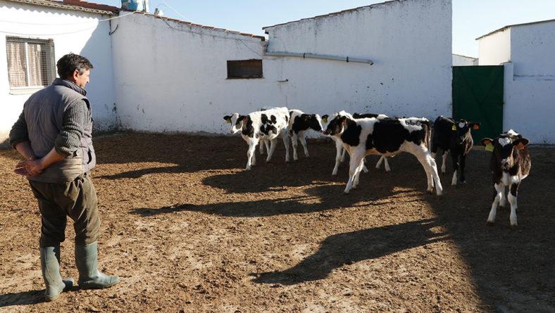 """Los ganaderos de leche se enfurecen con algunas industrias: """"Ofertar contratos a la baja es inasumible"""""""