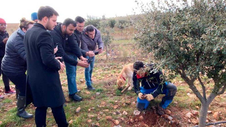 Castilla y León apuesta por el cultivo de la trufa y por la puesta en valor del producto