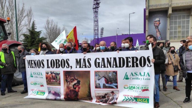"""Una caravana de ganaderos colapsa Valladolid contra una reforma del lobo """"que olvida la realidad del medio rural"""""""